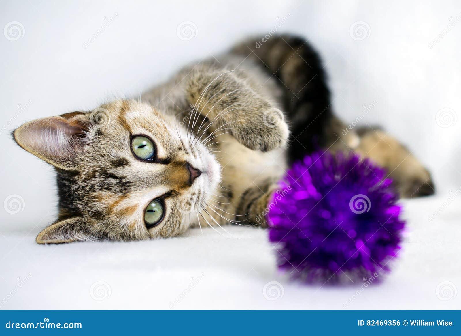 Foto da adoção do gatinho de Tabby Calico, Walton County Animal Control