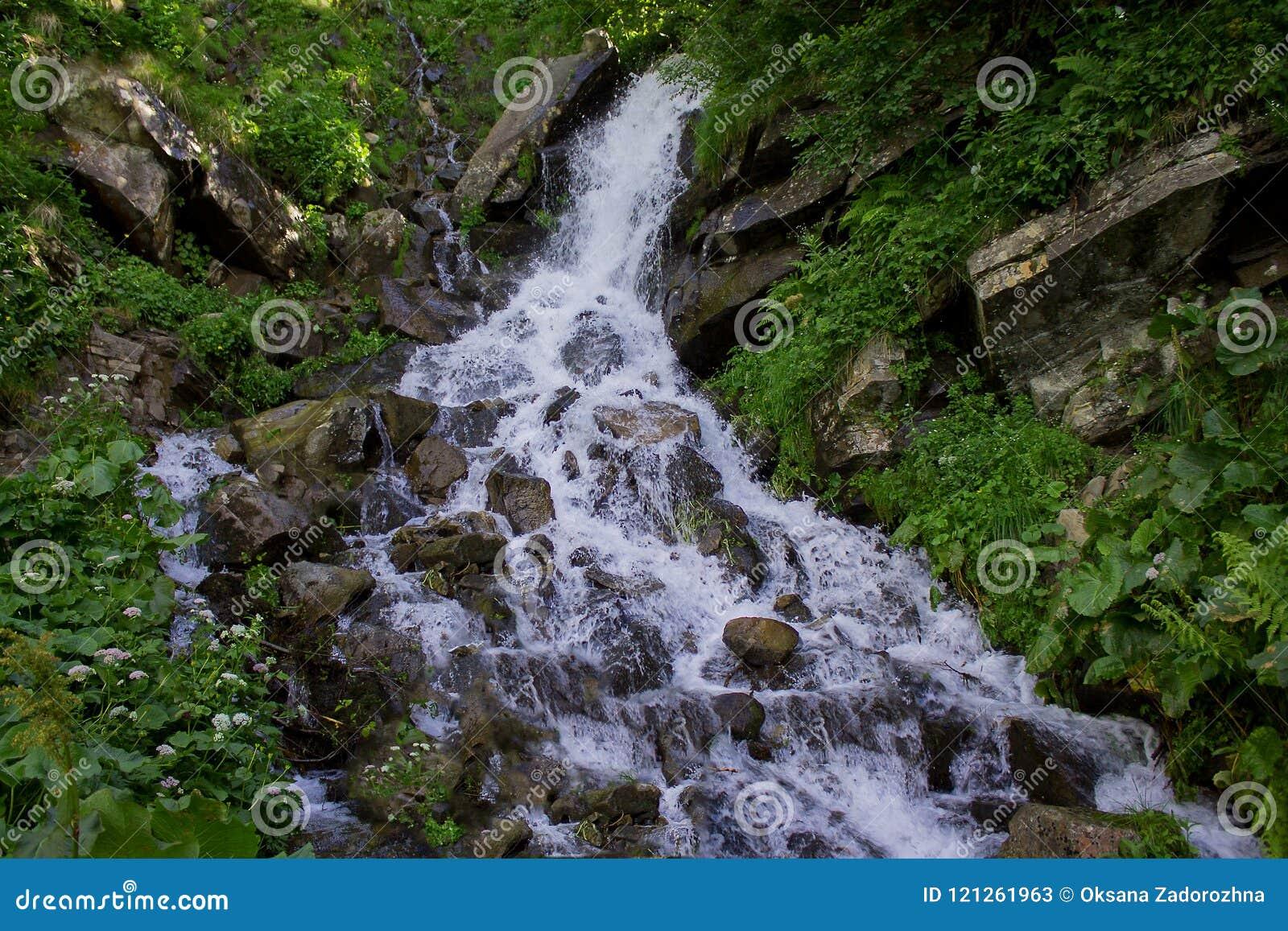 A foto da cachoeira pequena cercada por wildflowers e as hortaliças nas montanhas de Dzenbronia ajardinam