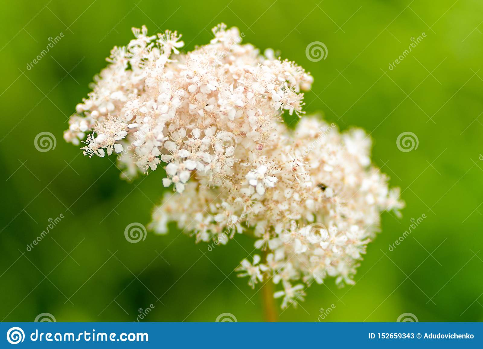 Foto de flores brancas pairosas no foco macio