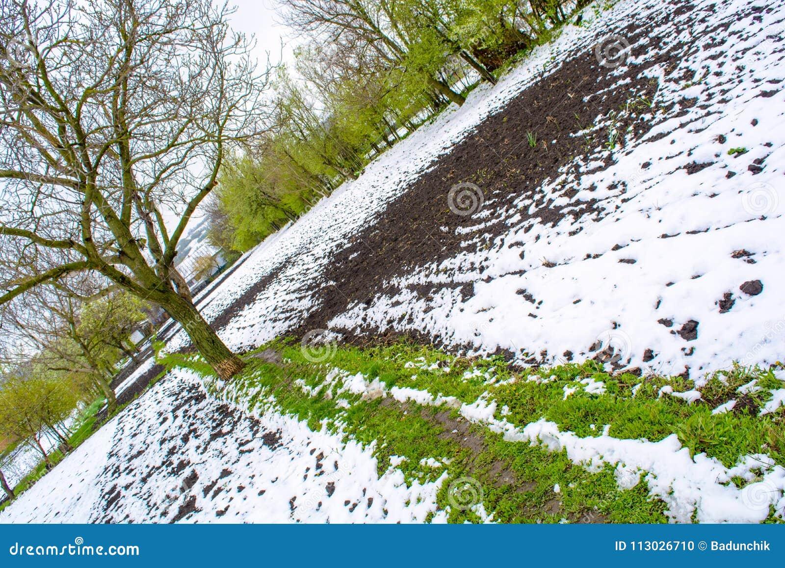 Foto de la nieve caida en la primavera durante el período floreciente