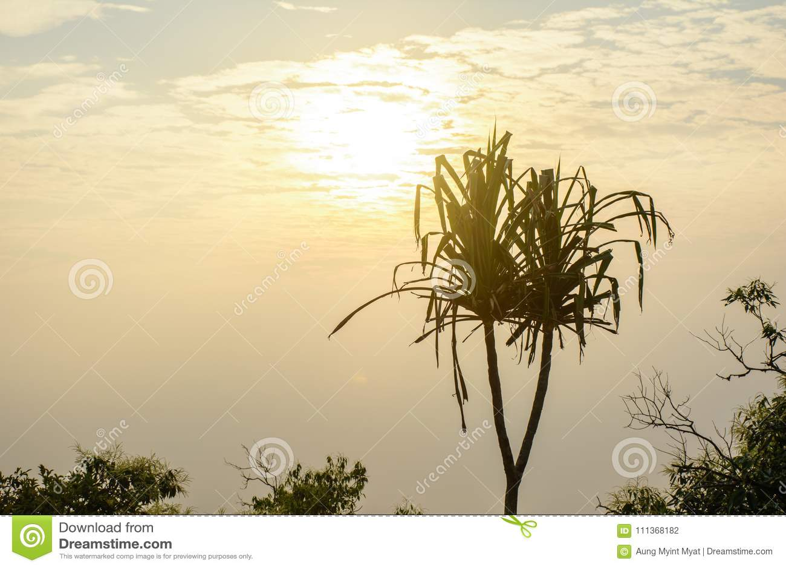 Foto de la subida hermosa del sol