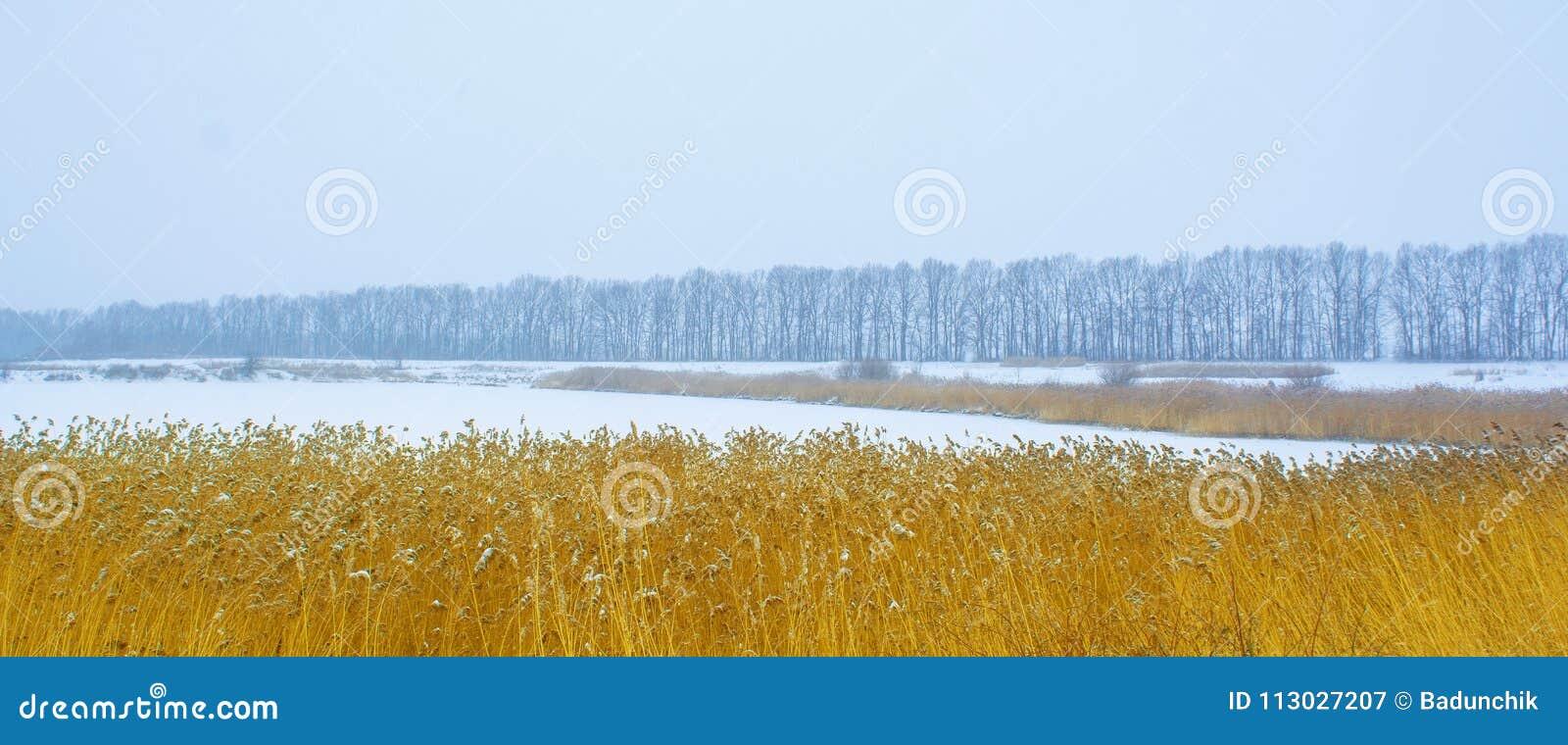 Foto de los árboles del invierno cerca del campo nevoso con el bastón