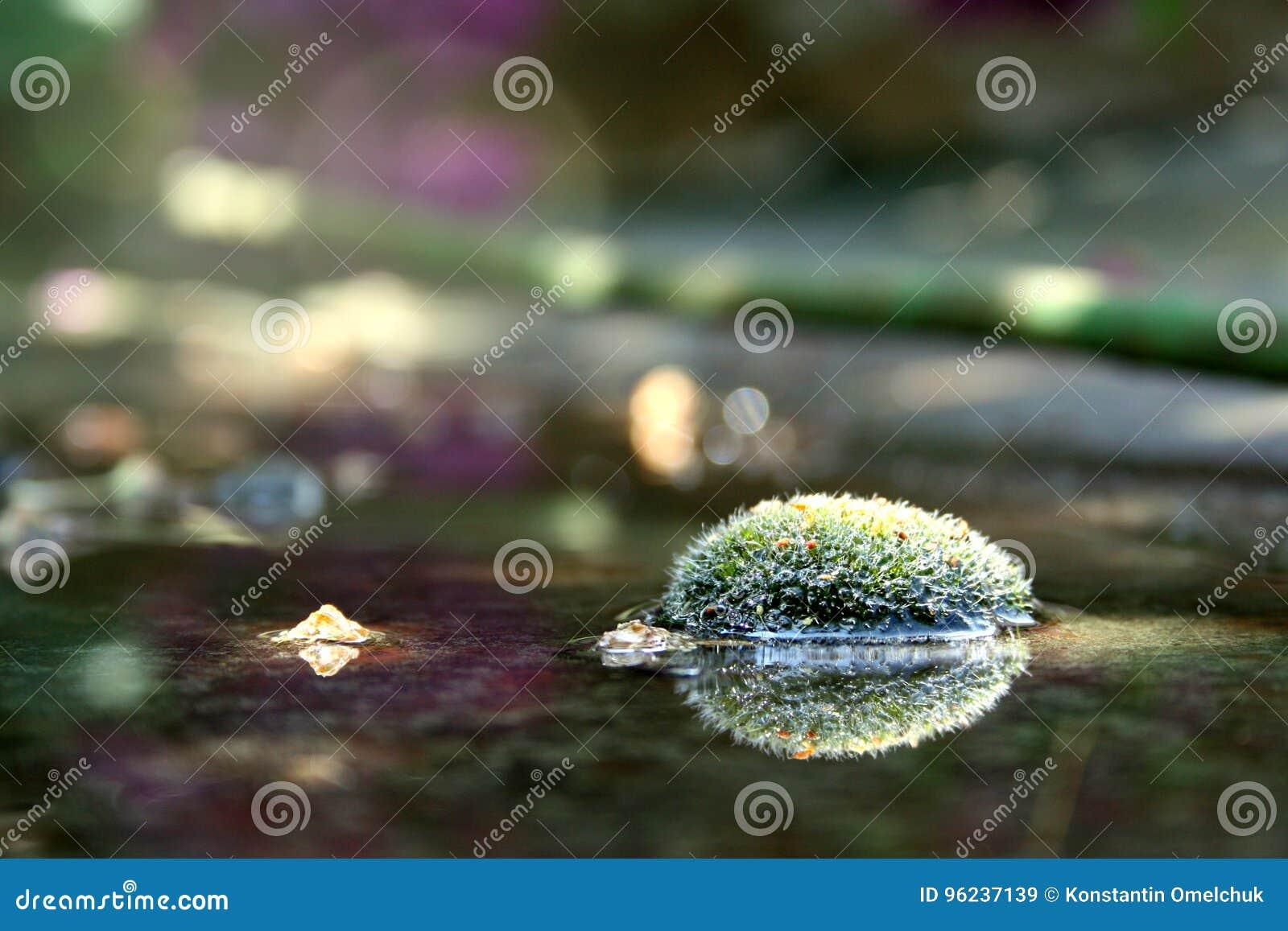 Foto de plancher de forêt pendant le matin Rosée sur l effet de fusée du soleil de mousse Anophyte dans l eau