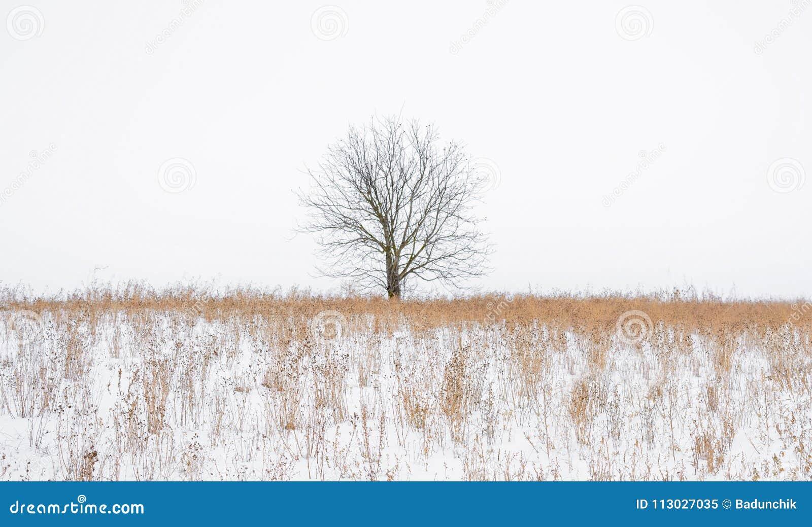 Foto de un árbol sin las hojas en el campo cubierto por la nieve en el invierno