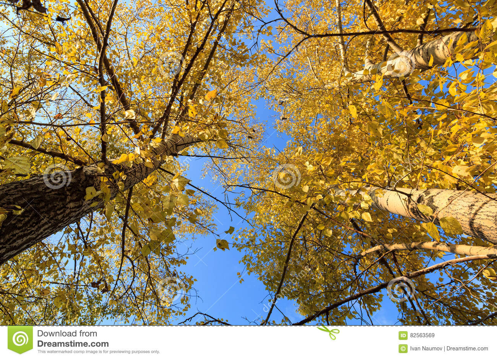 Foto de un bosque del otoño
