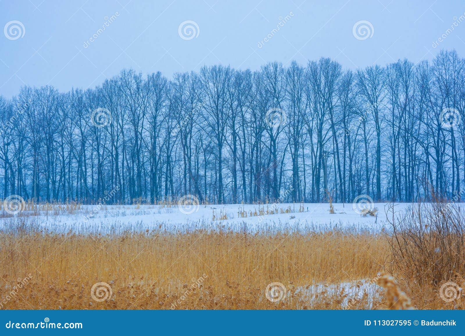 Foto degli alberi di inverno vicino al campo nevoso con la canna