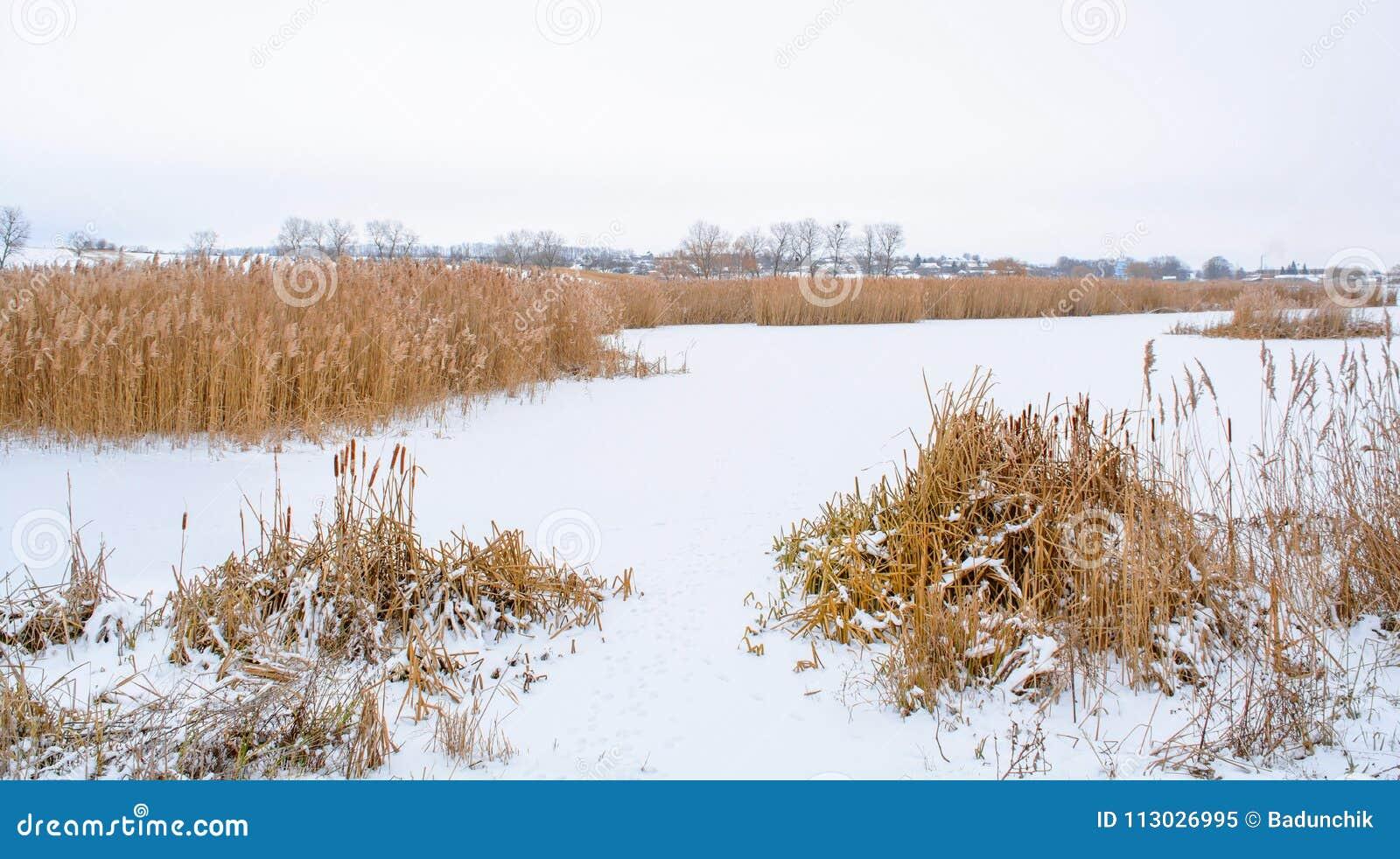 Foto del bastón del invierno en la charca congelada