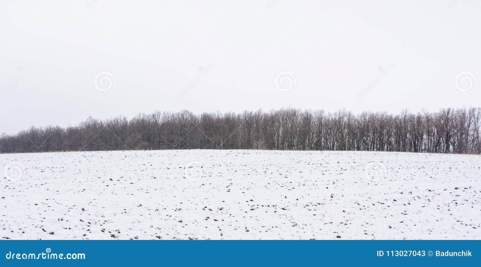 Foto del bosque del invierno con el campo cubierto por la nieve