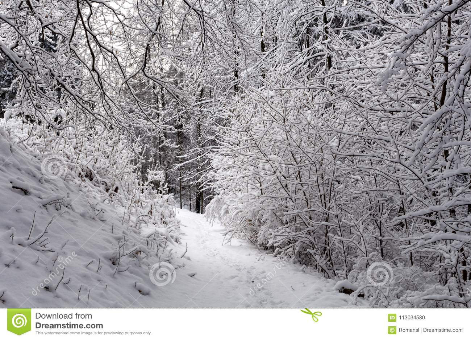 Foto del paisaje nevoso cubierta con nieve y el camino en invierno
