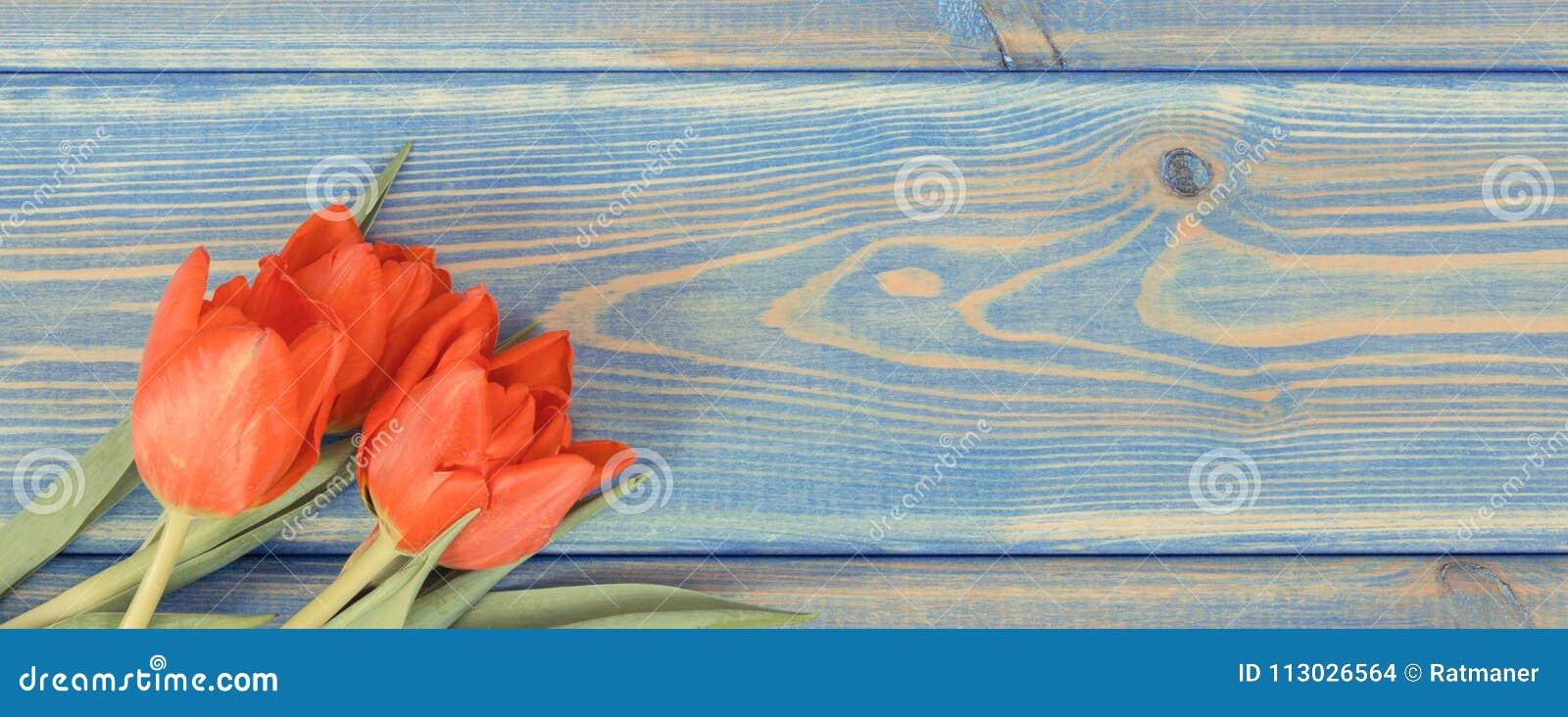 Foto del vintage, tulipanes rojos para diversas ocasiones en los tableros azules, espacio de la copia para el texto