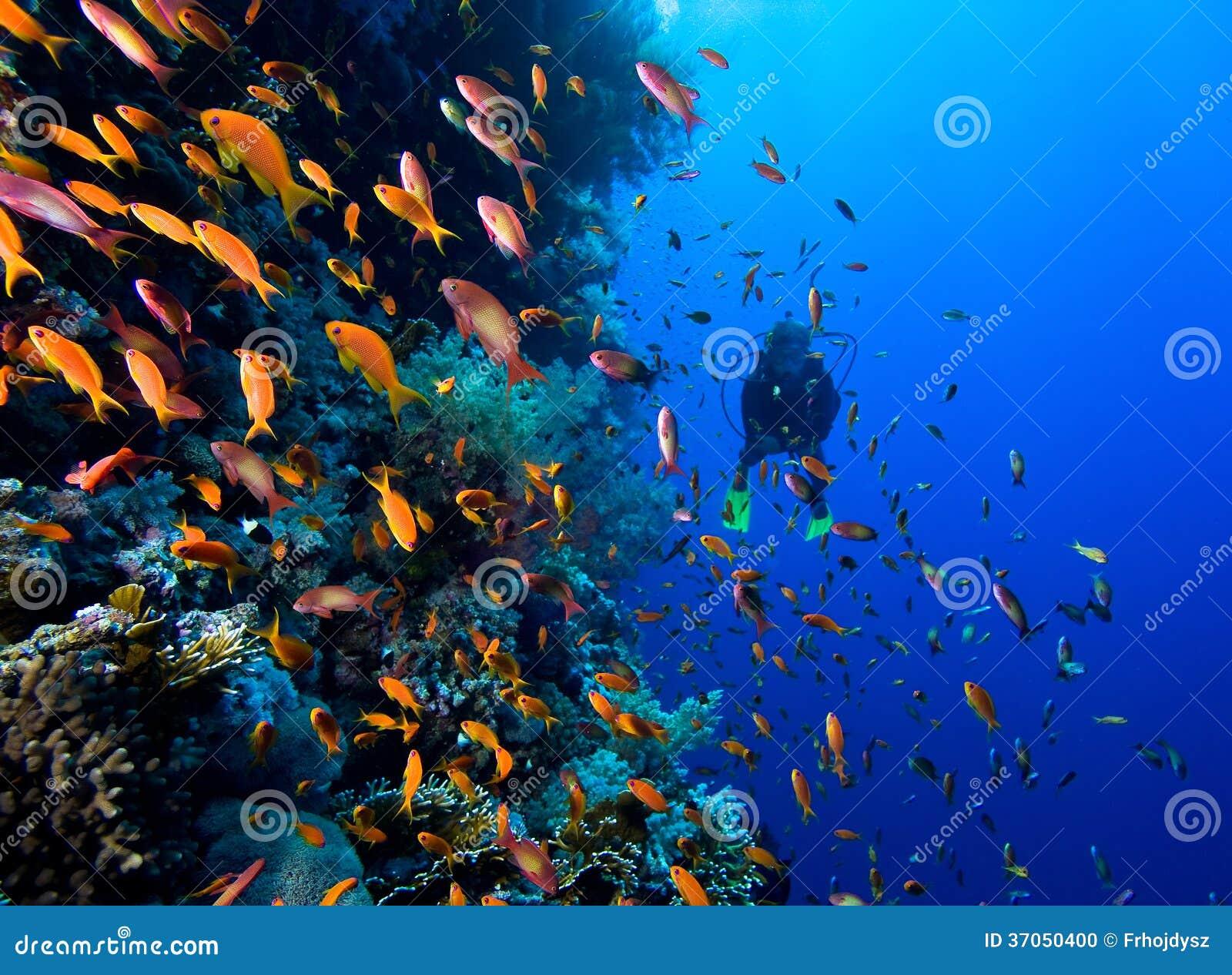 Foto der korallenroten Kolonie