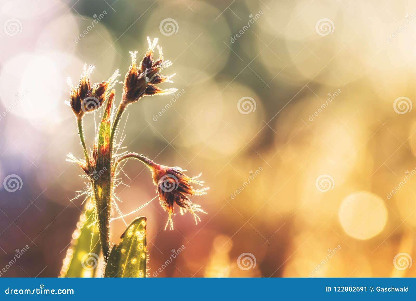 Foto dettagliata del primo piano di alcune piante con le goccioline della rugiada alla luce solare di mattina