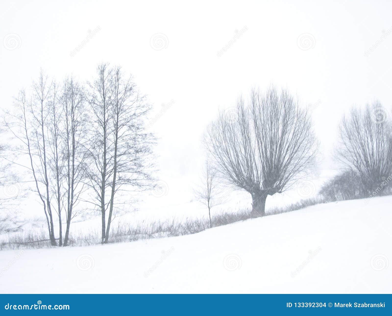 Foto di contrapposizione degli alberi glassati sul pendio di collina mentre nevicando