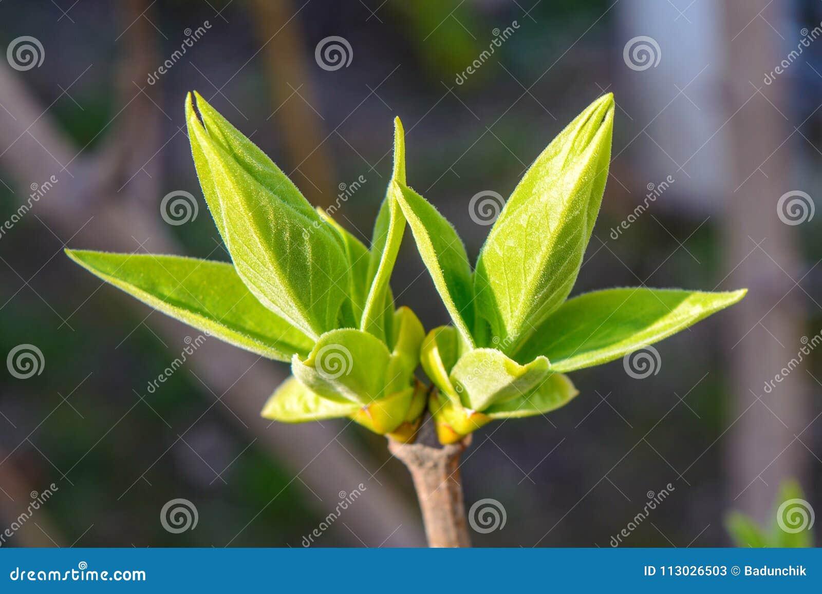 Foto di giovane ramo di albero su fondo scuro