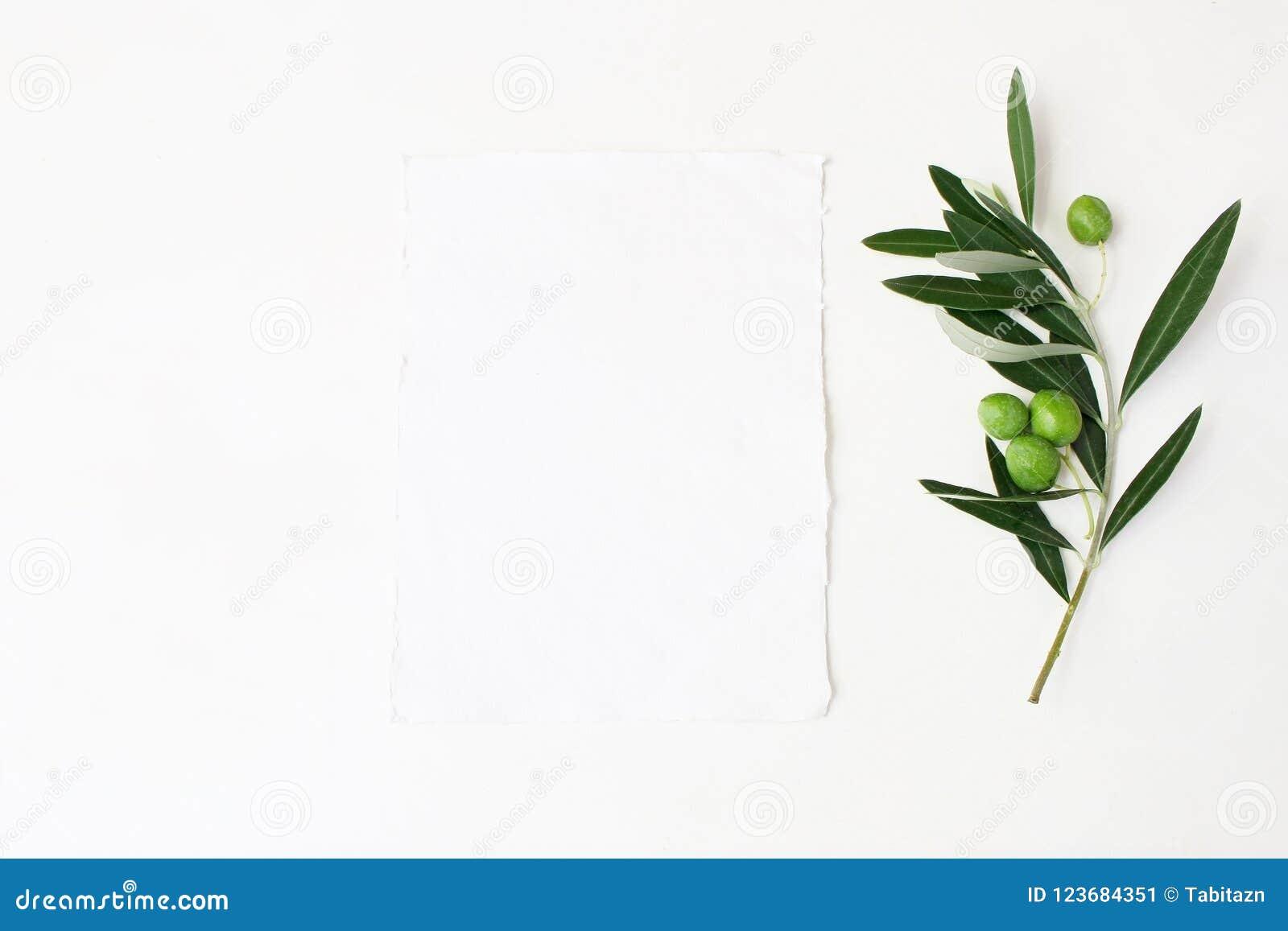 Foto di riserva disegnata Scena da tavolino del modello di nozze femminili con ramo di ulivo verde e la carta di carta verticale
