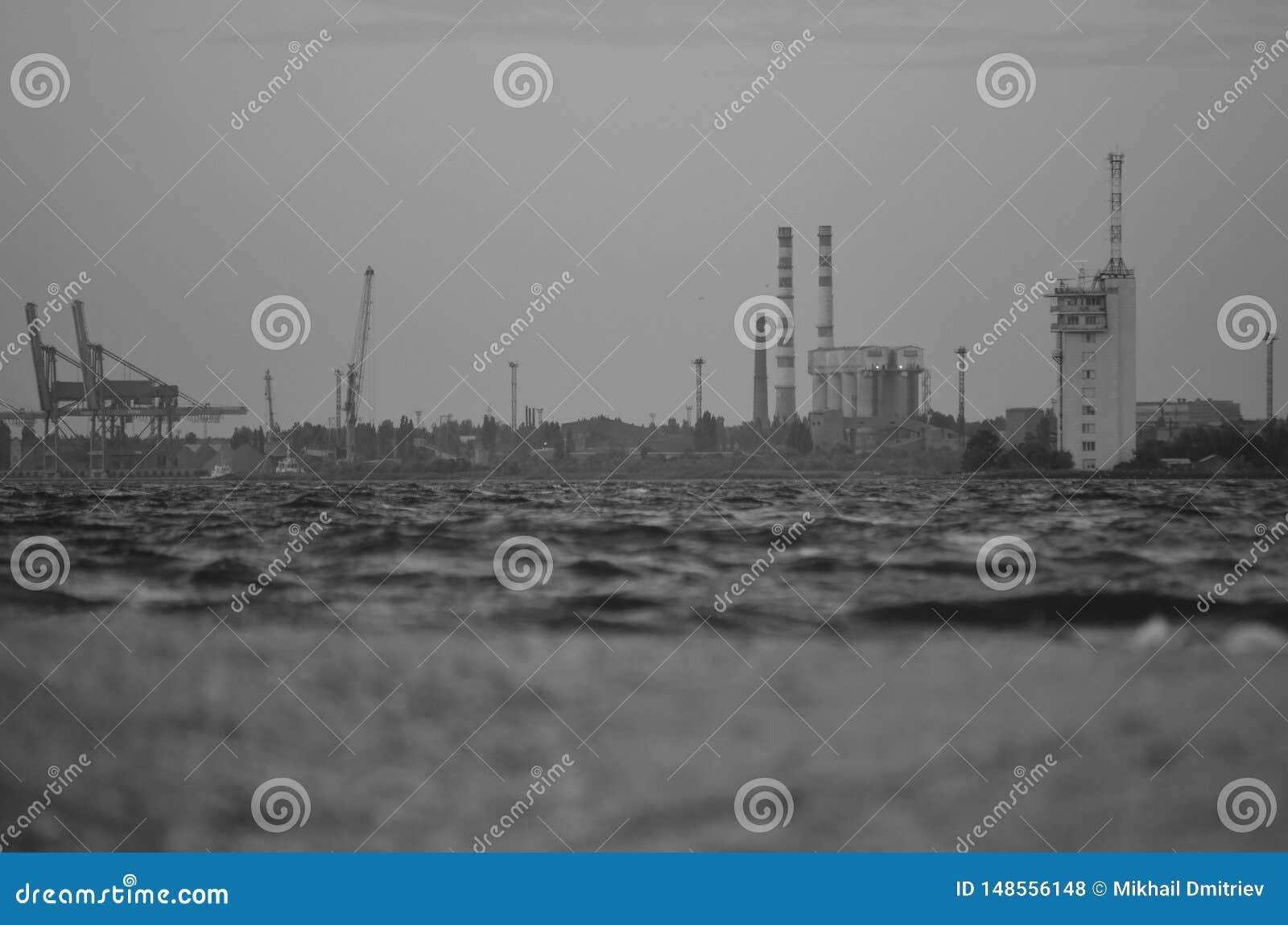 Foto do vintage do porto e planta na costa Vista da água à costa monocrom?tico