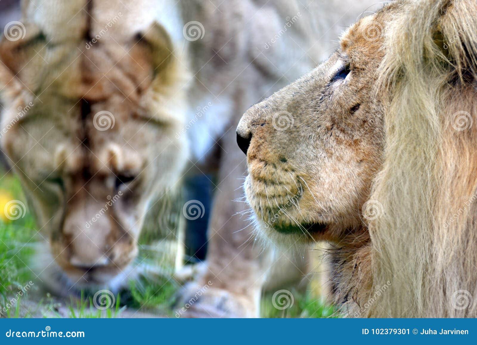 Foto gemacht während der Safari in Ngorongoro-Bereich