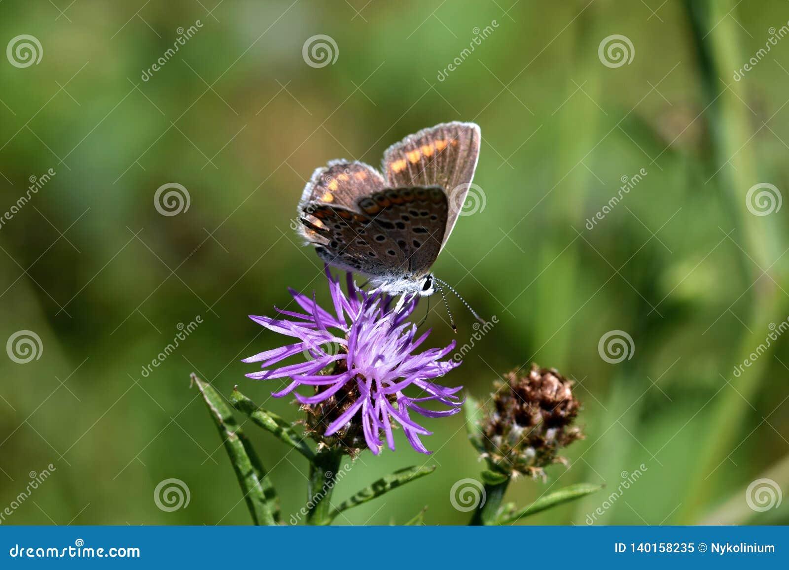 Foto macra de un marrón y de una mariposa anaranjada