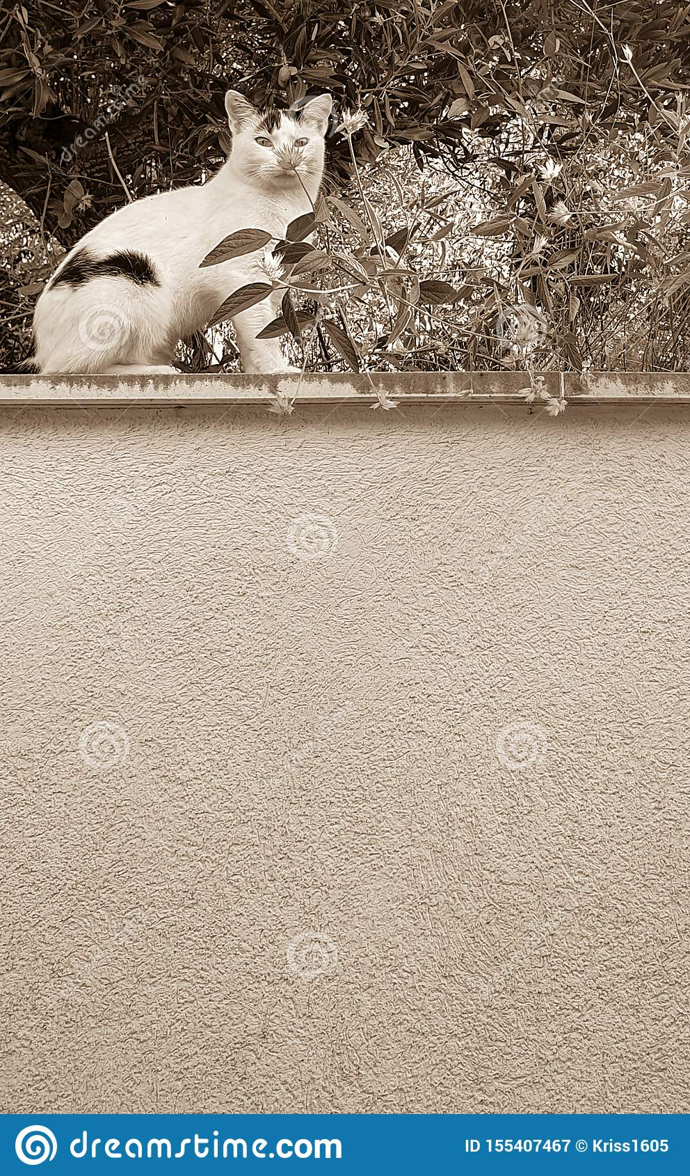 Foto monocromatica di un gatto selvaggio che si siede su un alto parapetto di pietra sotto di olivo e che odora un fiore