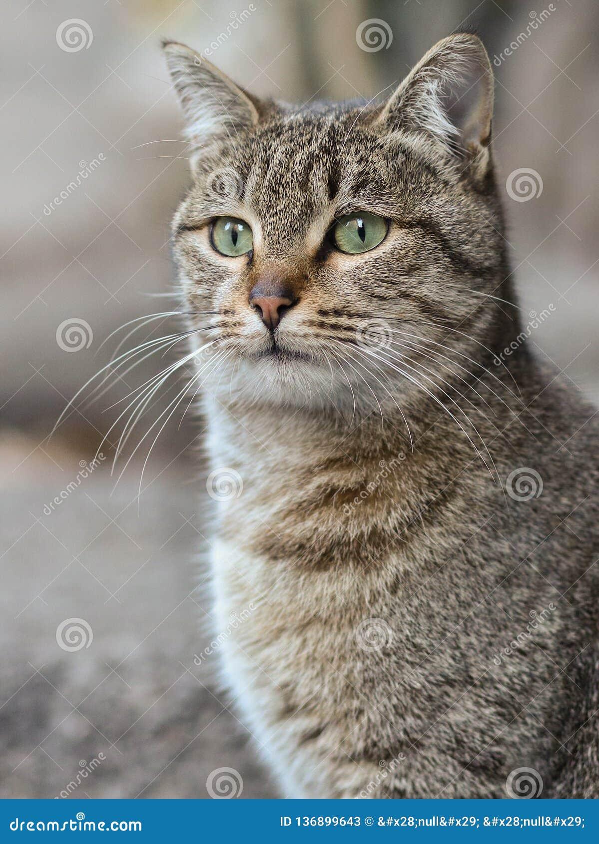 Foto smarrita di 2019 Cat Photographer nuova, gatto marrone sveglio