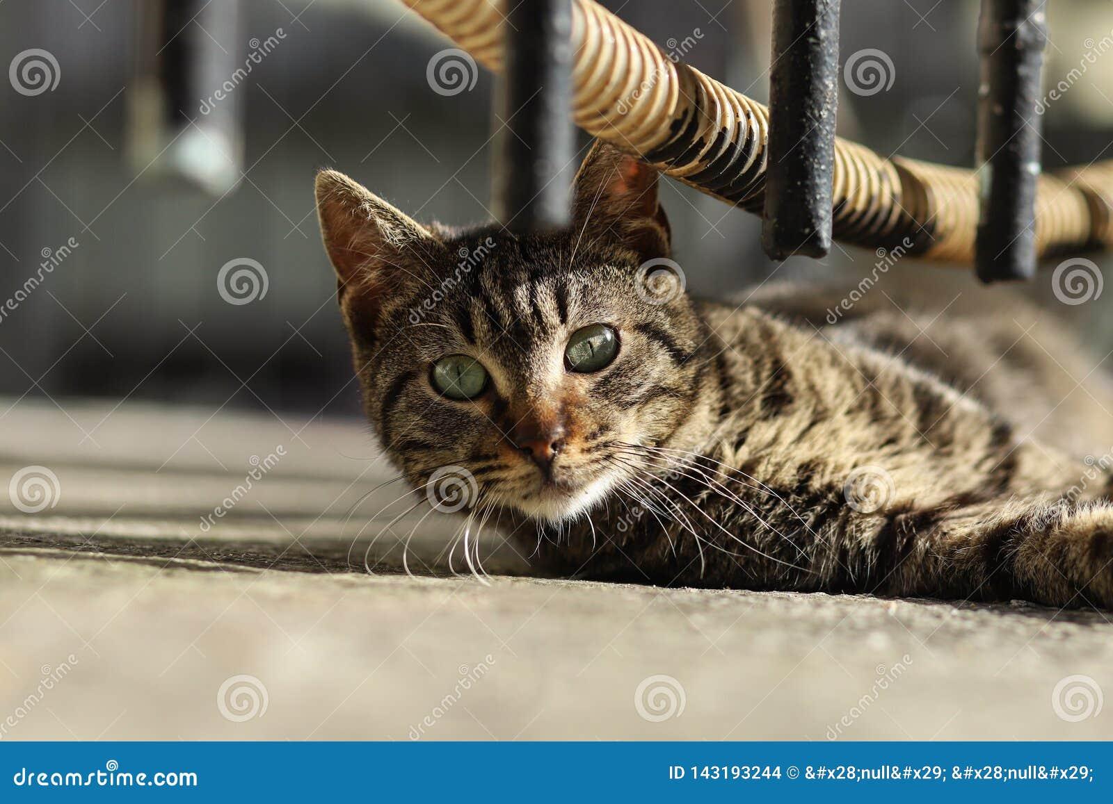Foto smarrita di 2019 Cat Photographer nuova, gatto sveglio della via