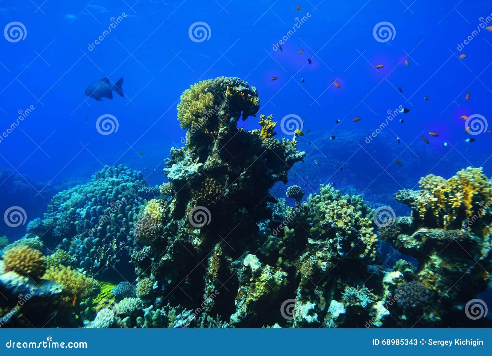 Foto subacuática del arrecife de coral