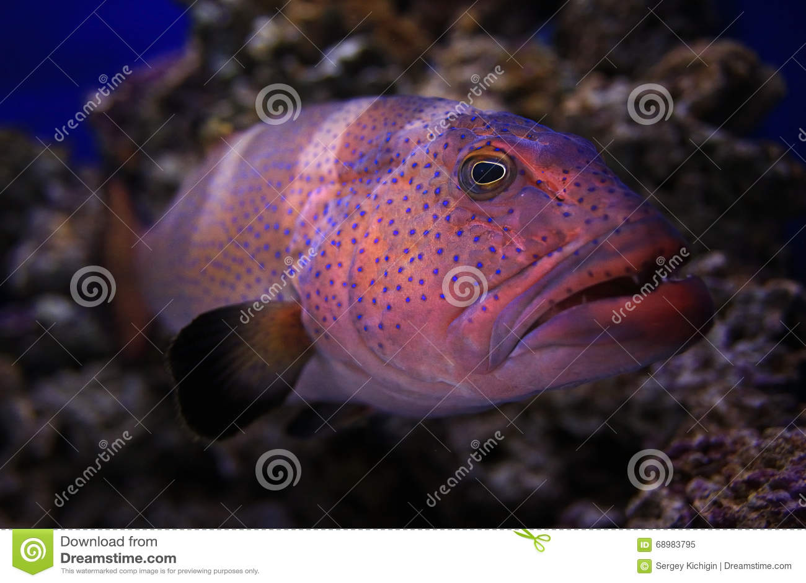 Foto subacuática del mero