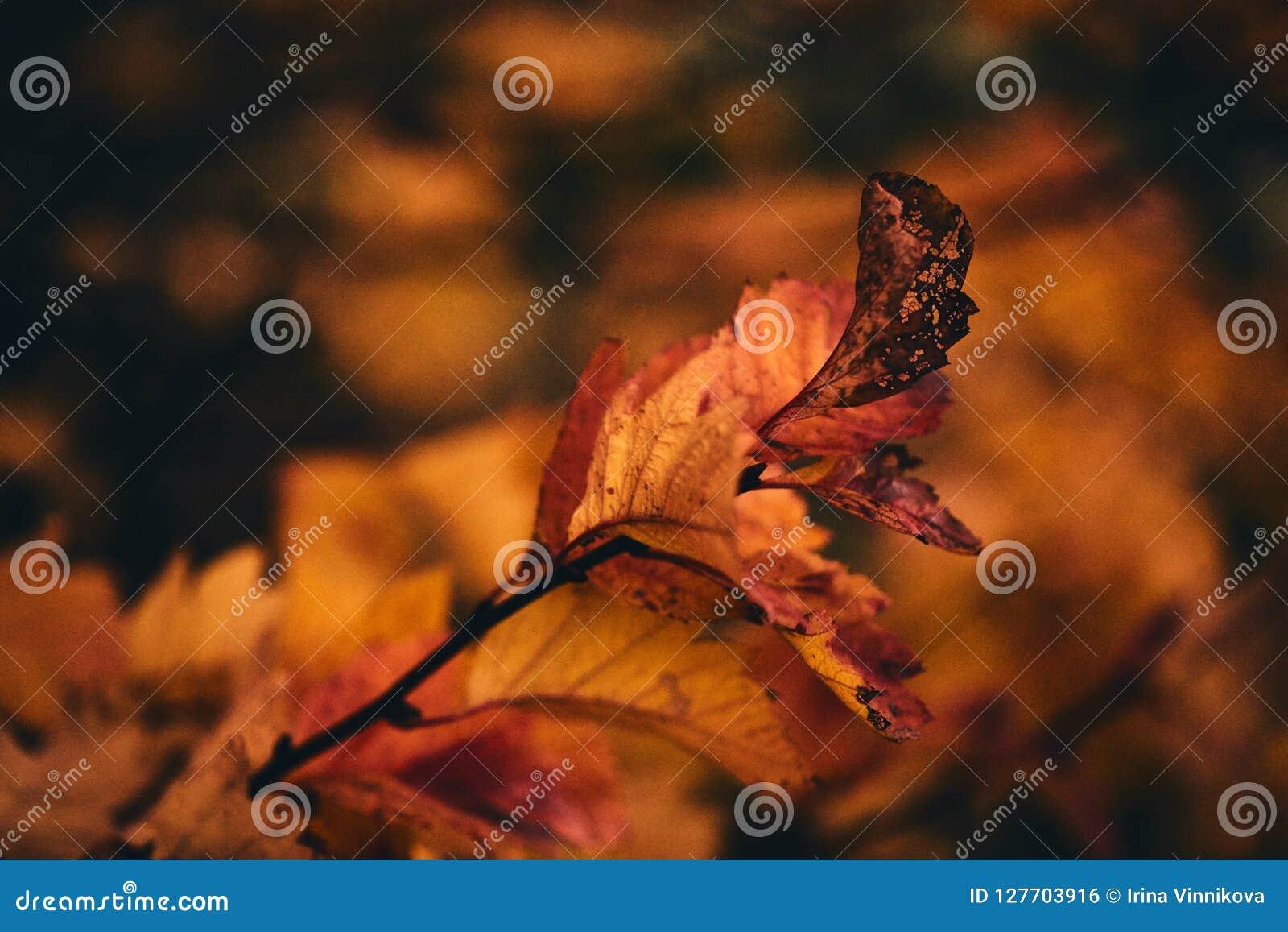 Foto van de herfstbladeren op een boom Gestileerd als analogon bereikte foto De gouden Herfst Heldere rode, gele, oranje achtergr
