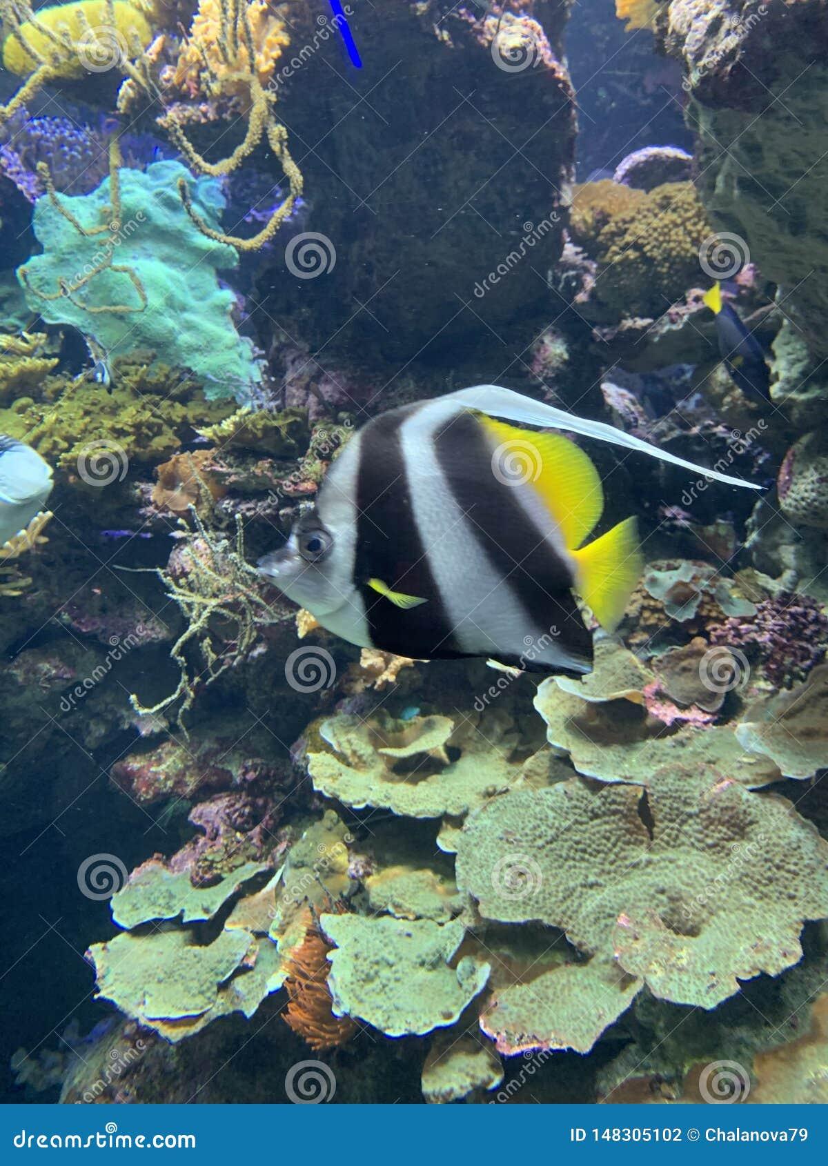 Foto van een tropische Vis op een koraalrif