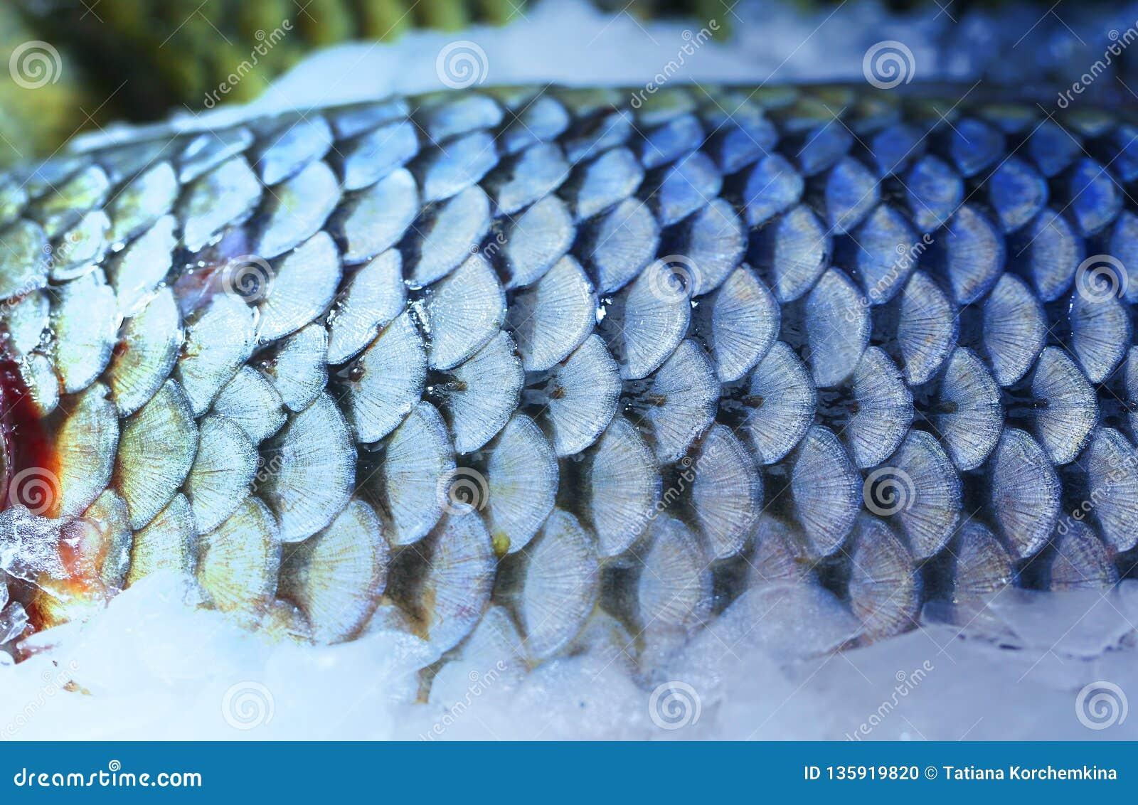 Foto van mooie macro van grote vissenschalen