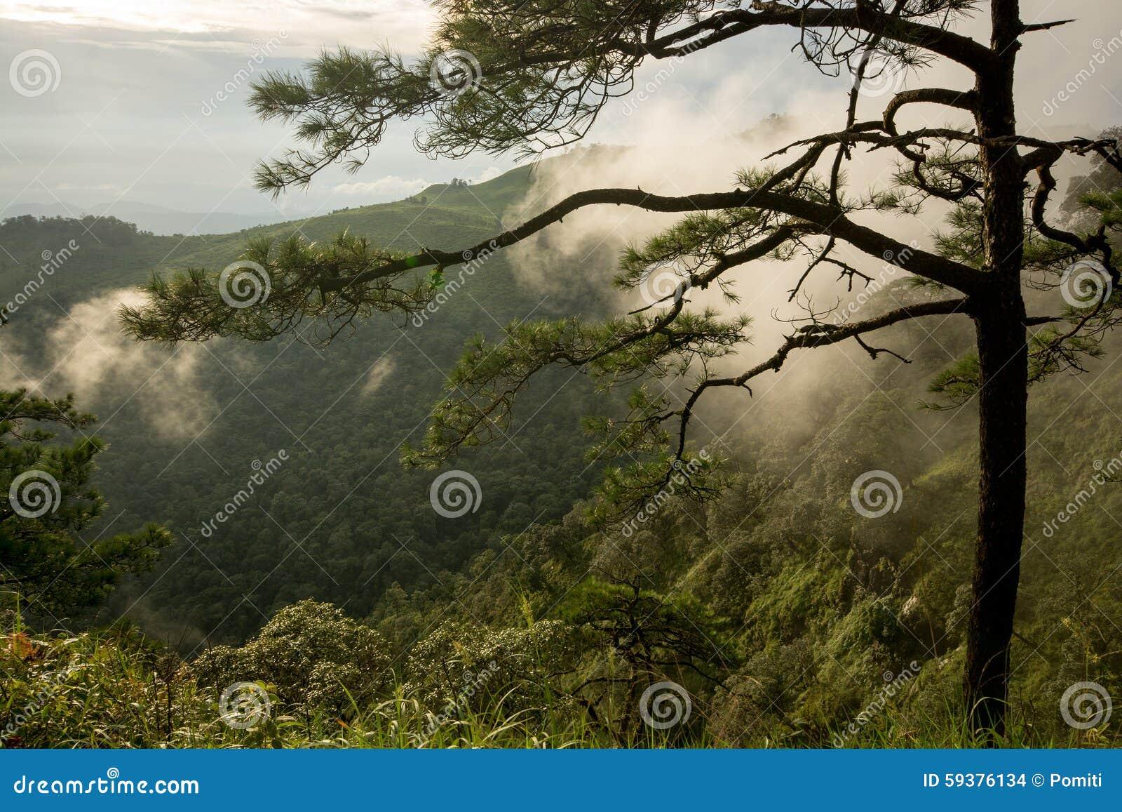 Foto van pijnboombomen op de bergen met mist