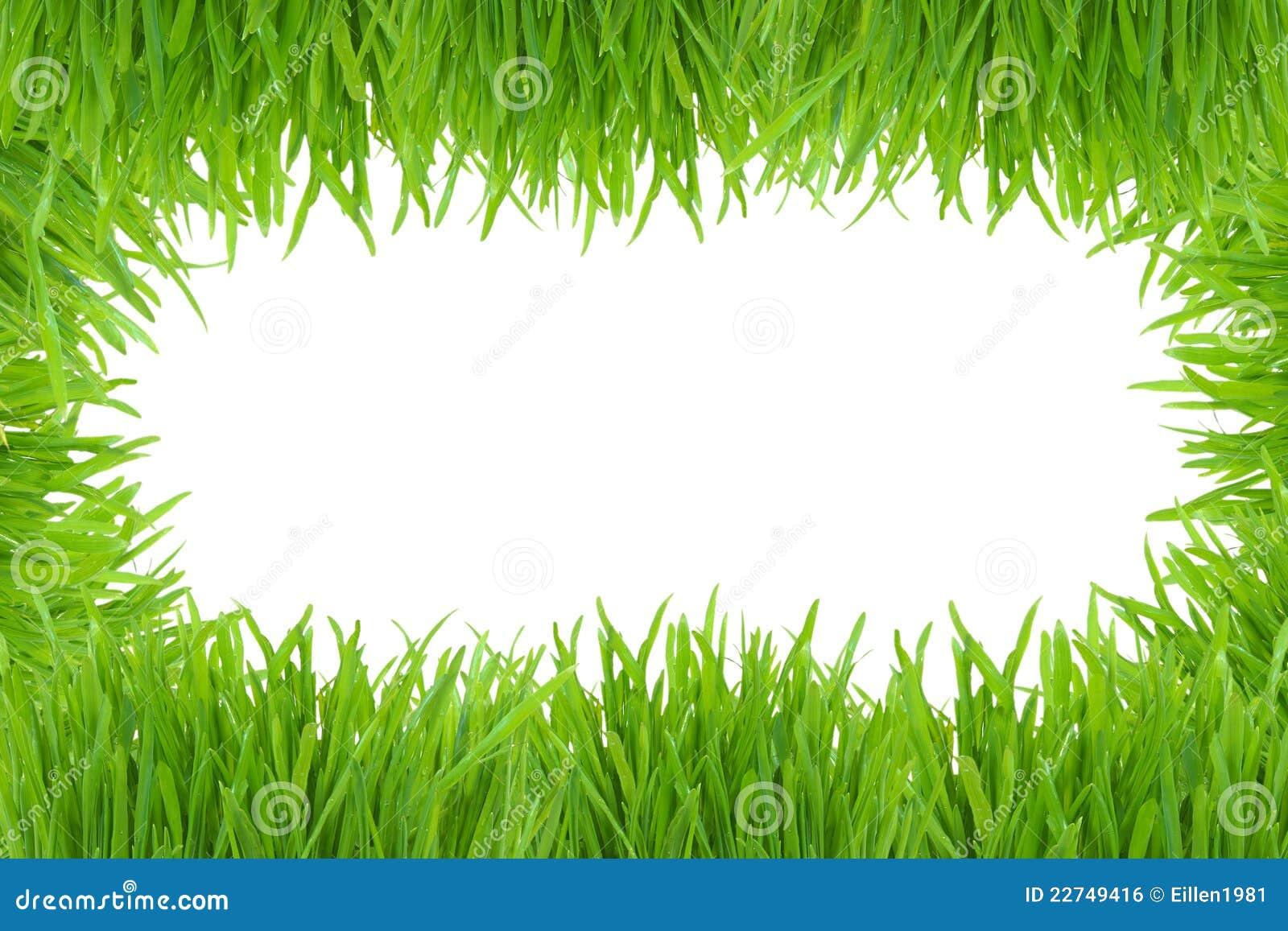 Fotofeld des grünen Grases getrennt auf Weiß