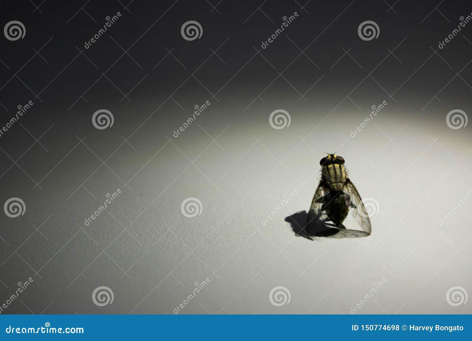 Fotogeniczny komarnica portret z światło reflektorów