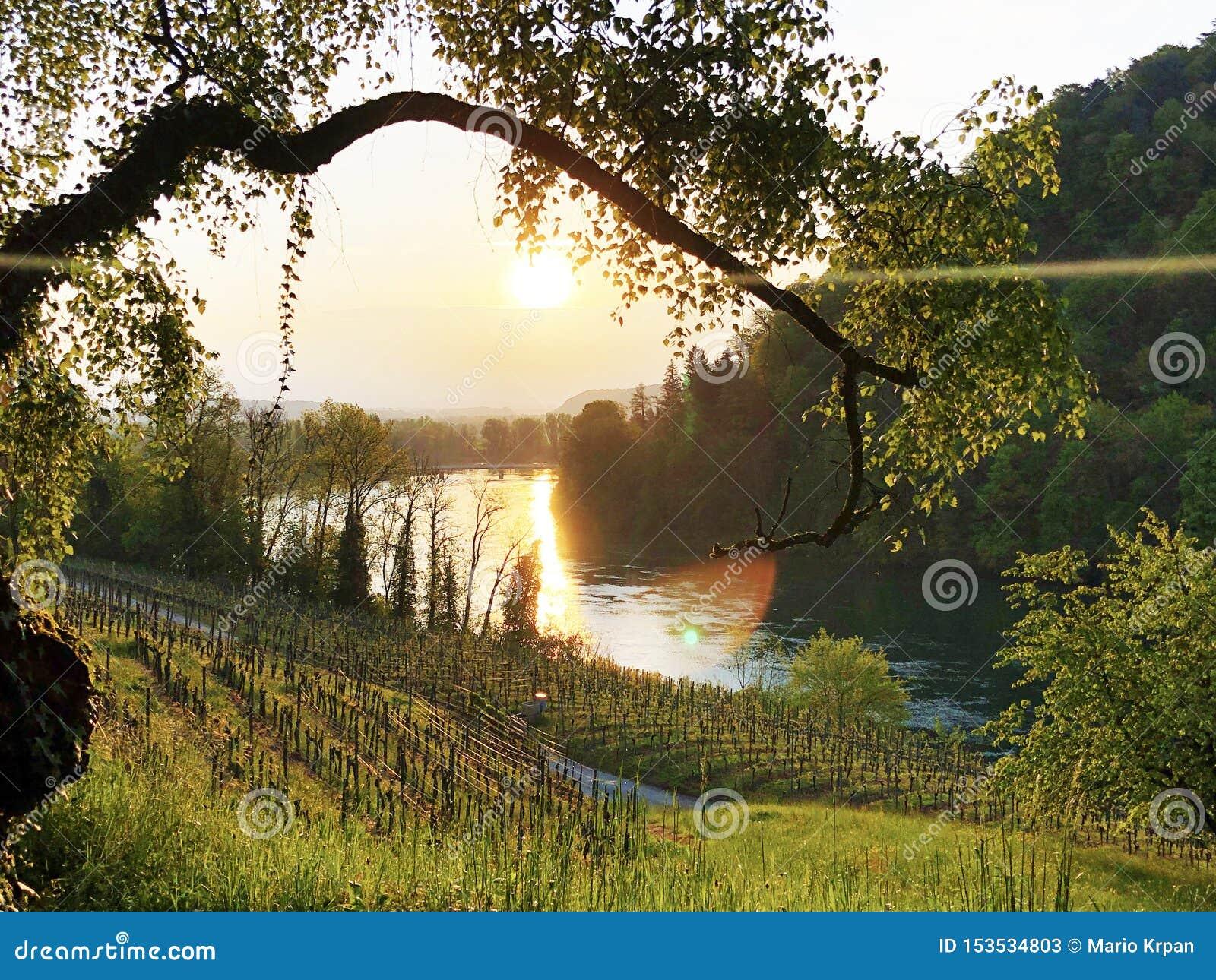 Fotogenieke wijngaarden en laaglandbossen in de Rijn-vallei, Buchberg