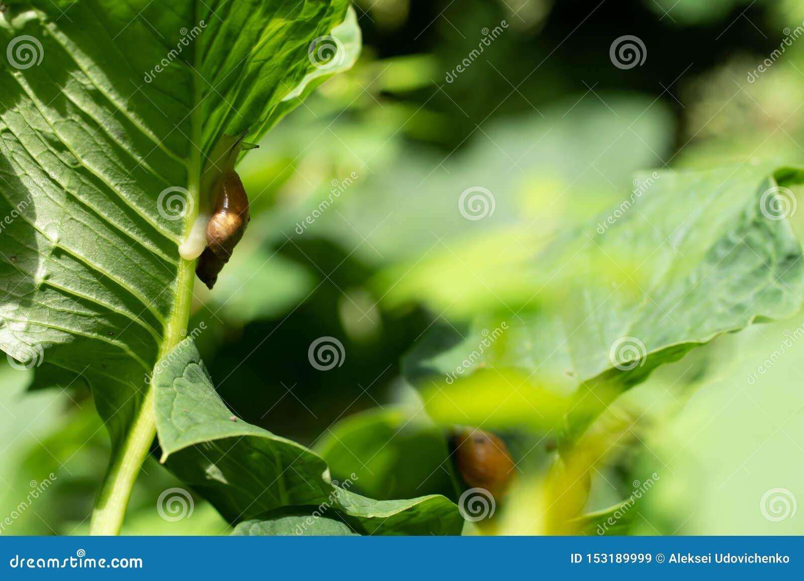 Fotografia ślimaczek na liściu w miękkiej ostrości