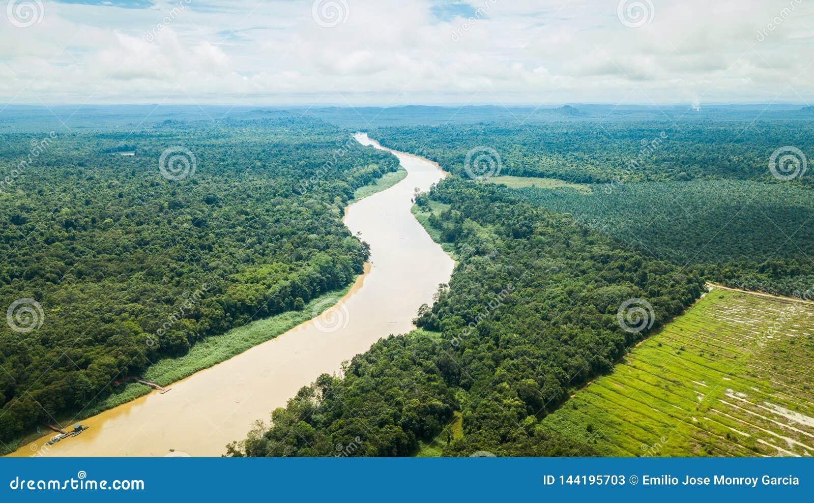 Fotografia aérea do rio de Kinabatangan em Bornéu