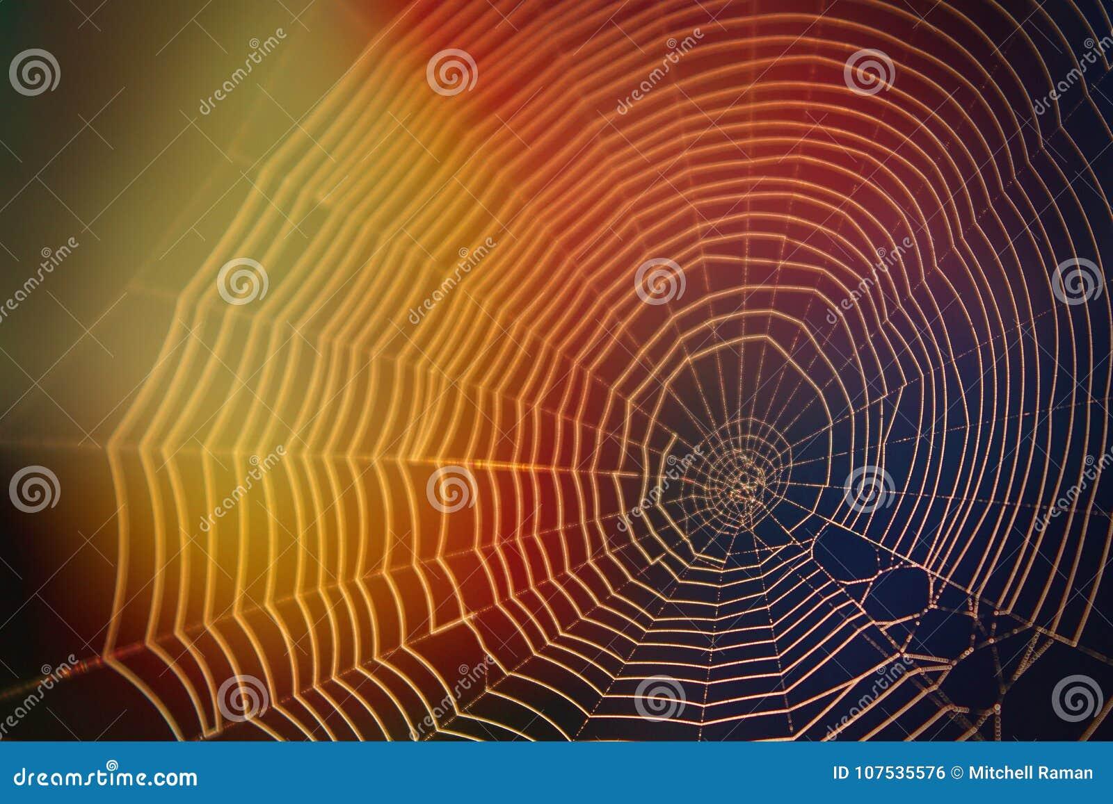 Fotografia abstrata da natureza da Web de aranha na luz solar com muitas cores