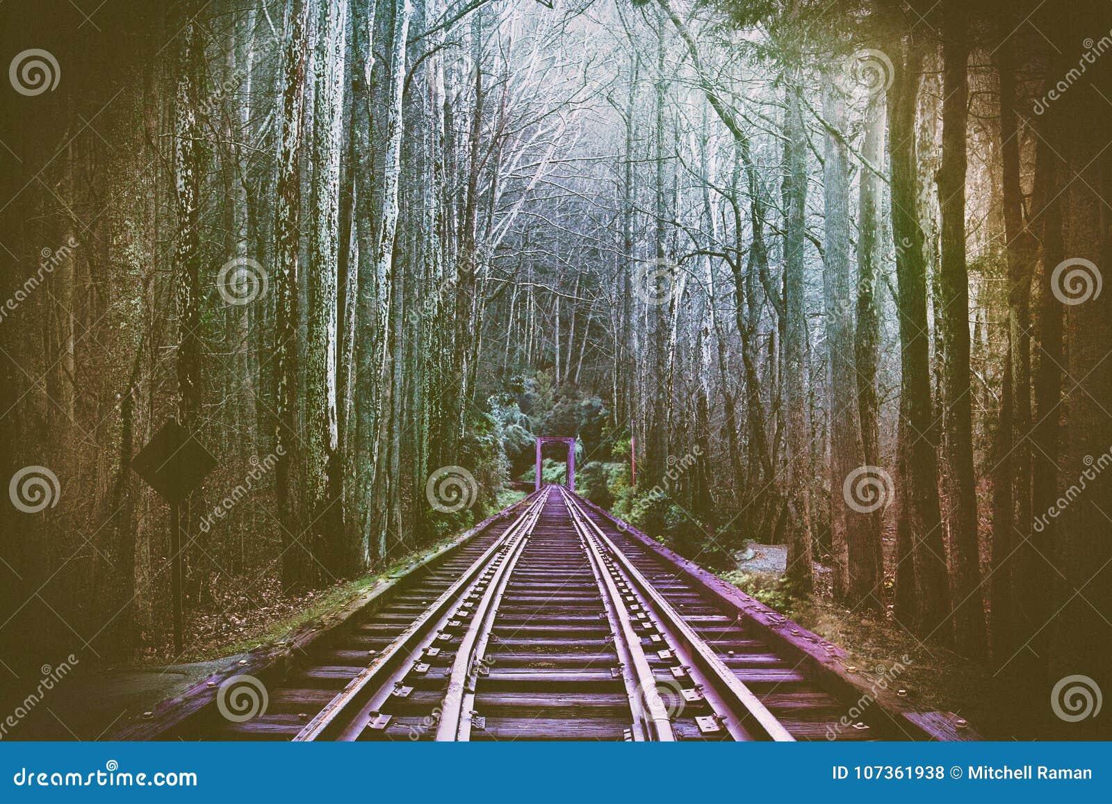 Fotografia abstrata da perspectiva de ferrovias do trem na floresta