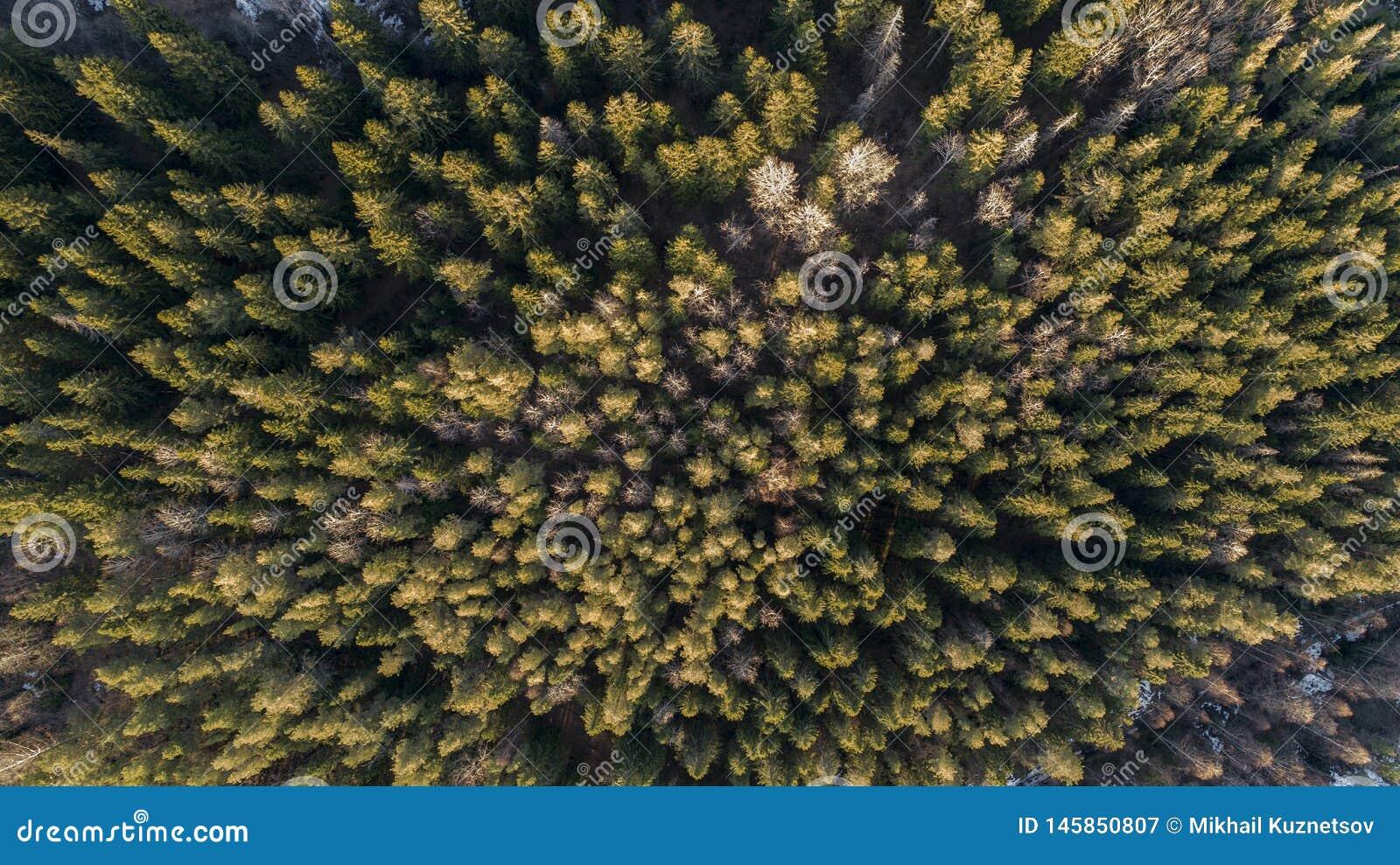 Fotografia aerea di una foresta nell inverno