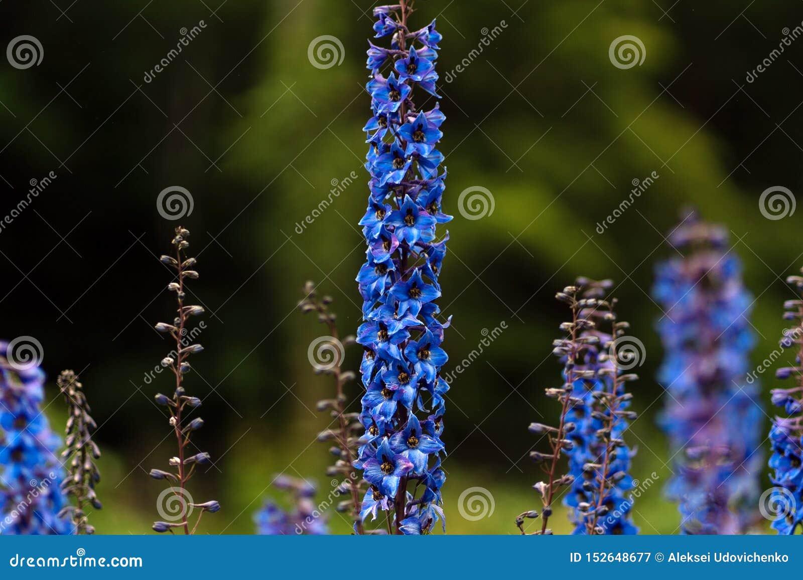 Fotografia błękitni kwiaty na polu w miękkiej ostrości