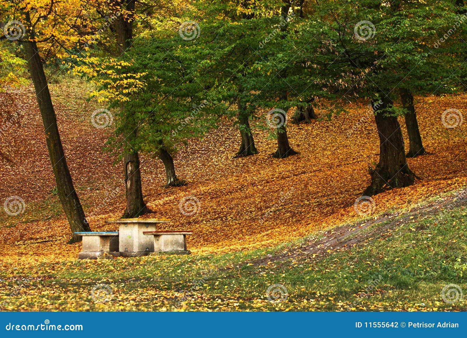 Fotografia bonita do outono