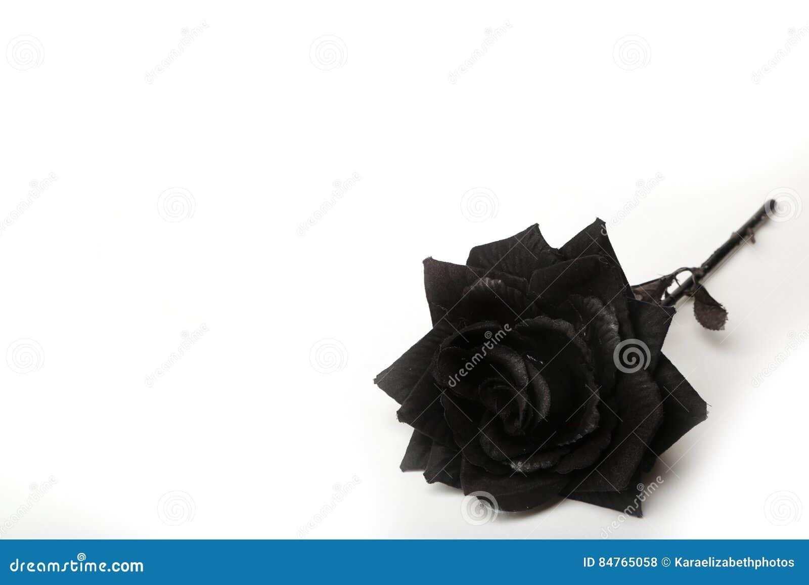 Fotografia Di Una Rosa Nera Su Un Fondo Bianco Fotografia