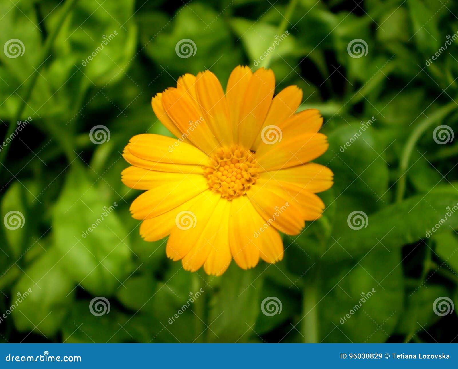 Fotografia pomarańczowy kwiat na zamazanym zieleni i czerni backgrou