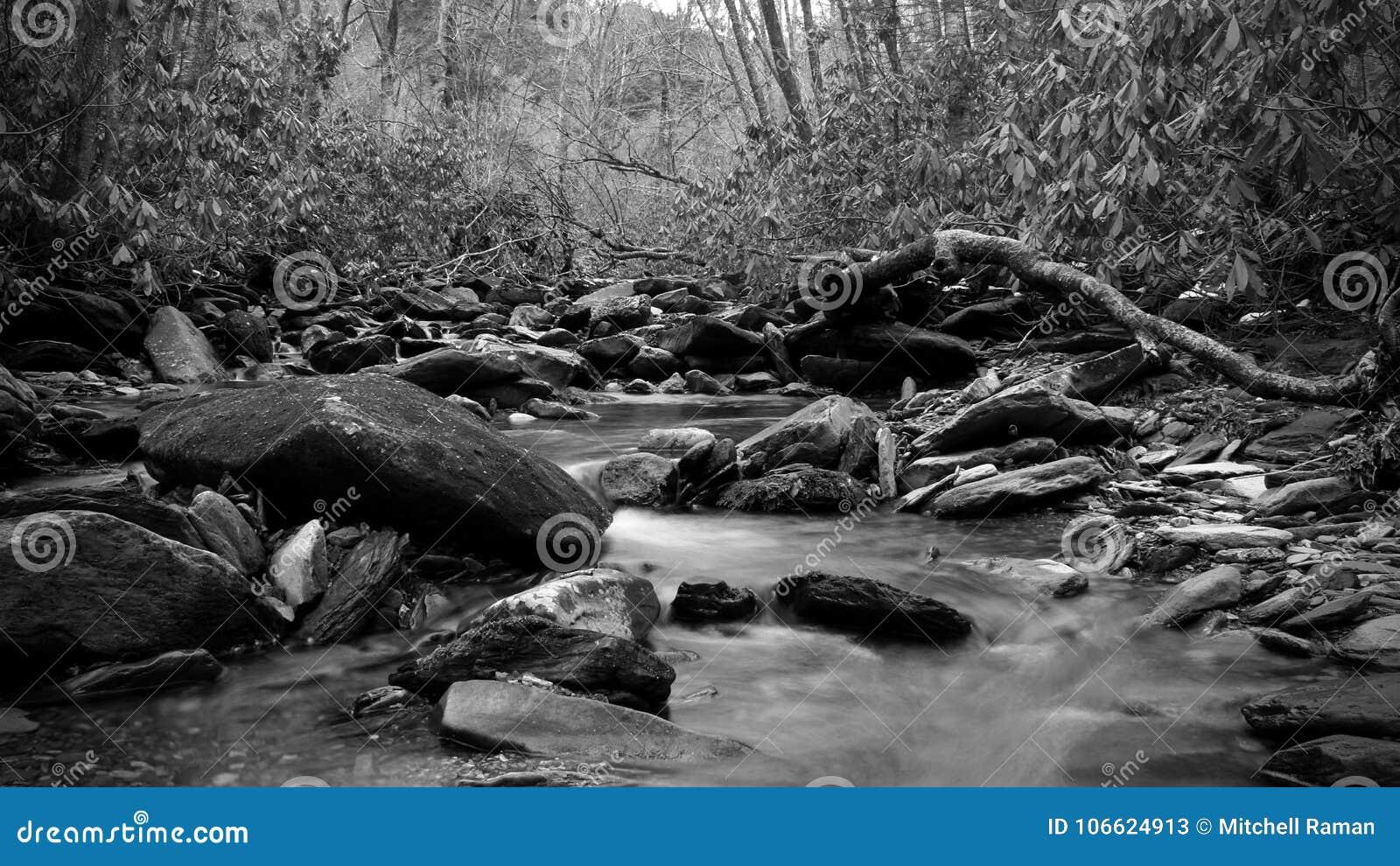 Fotografia preto e branco da natureza de um rio rujir nas madeiras profundas do parque nacional de Great Smoky Mountains