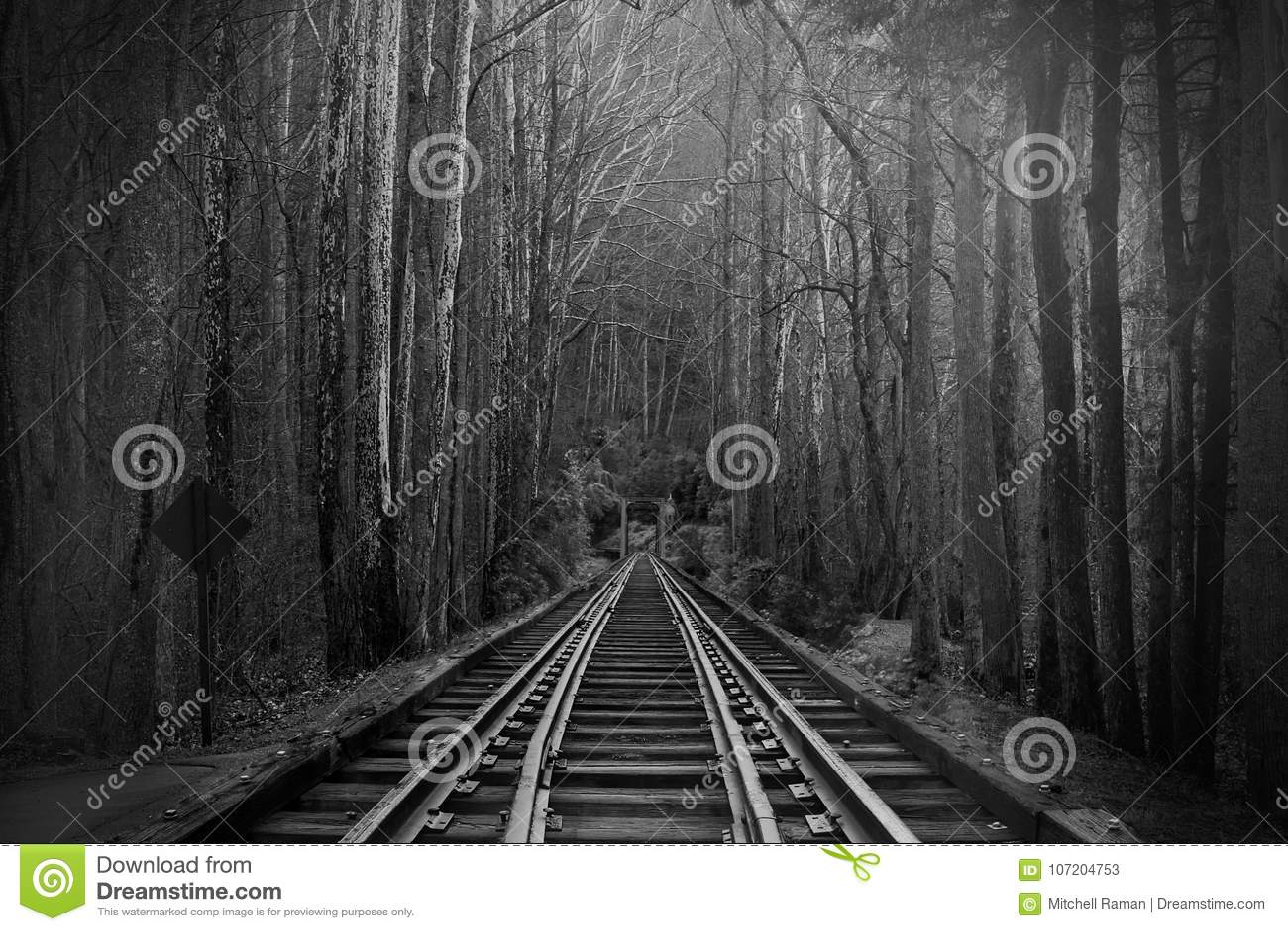 Fotografia preto e branco de trilhas do trem ou de estradas de trilho na floresta mágica da fantasia