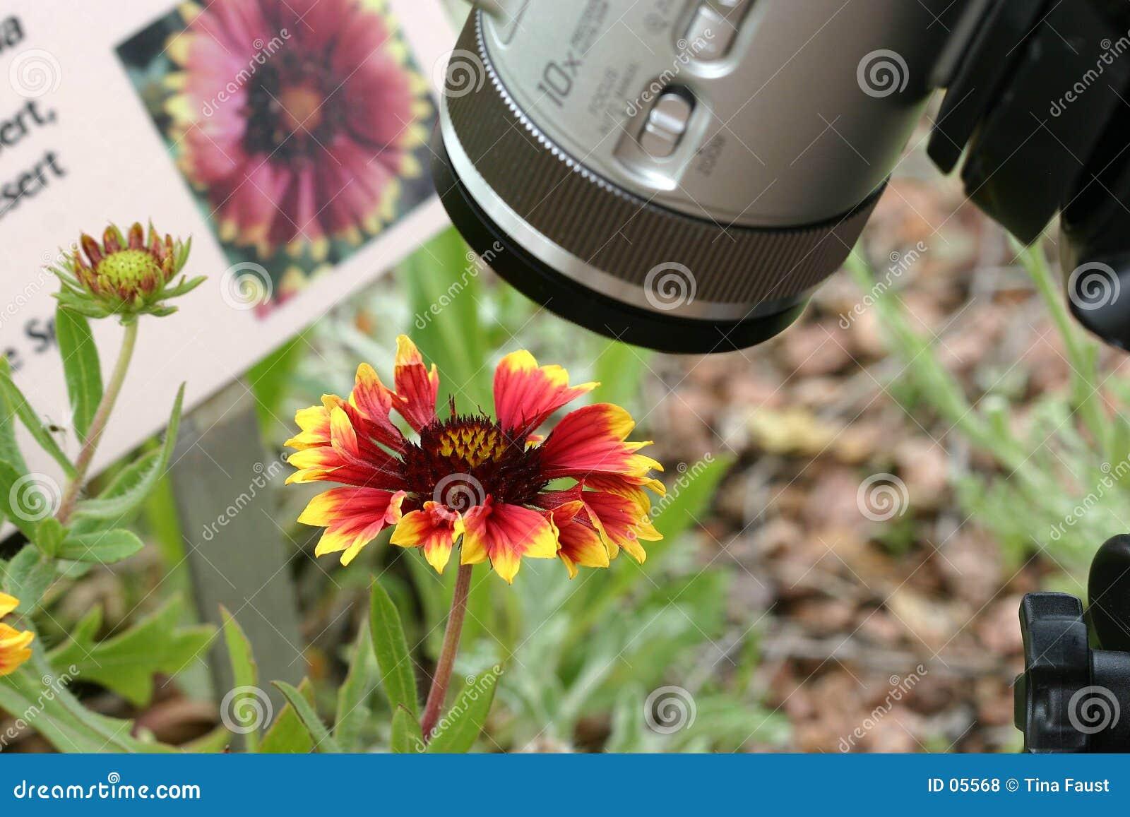Fotografstudy