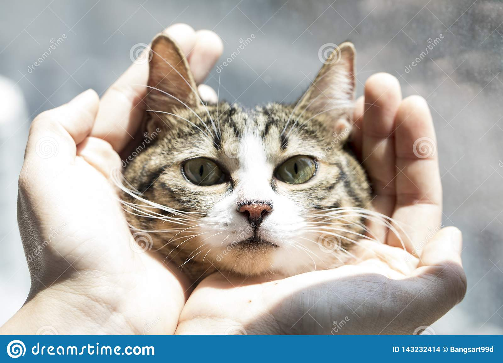 Fotos preciosas de un gato
