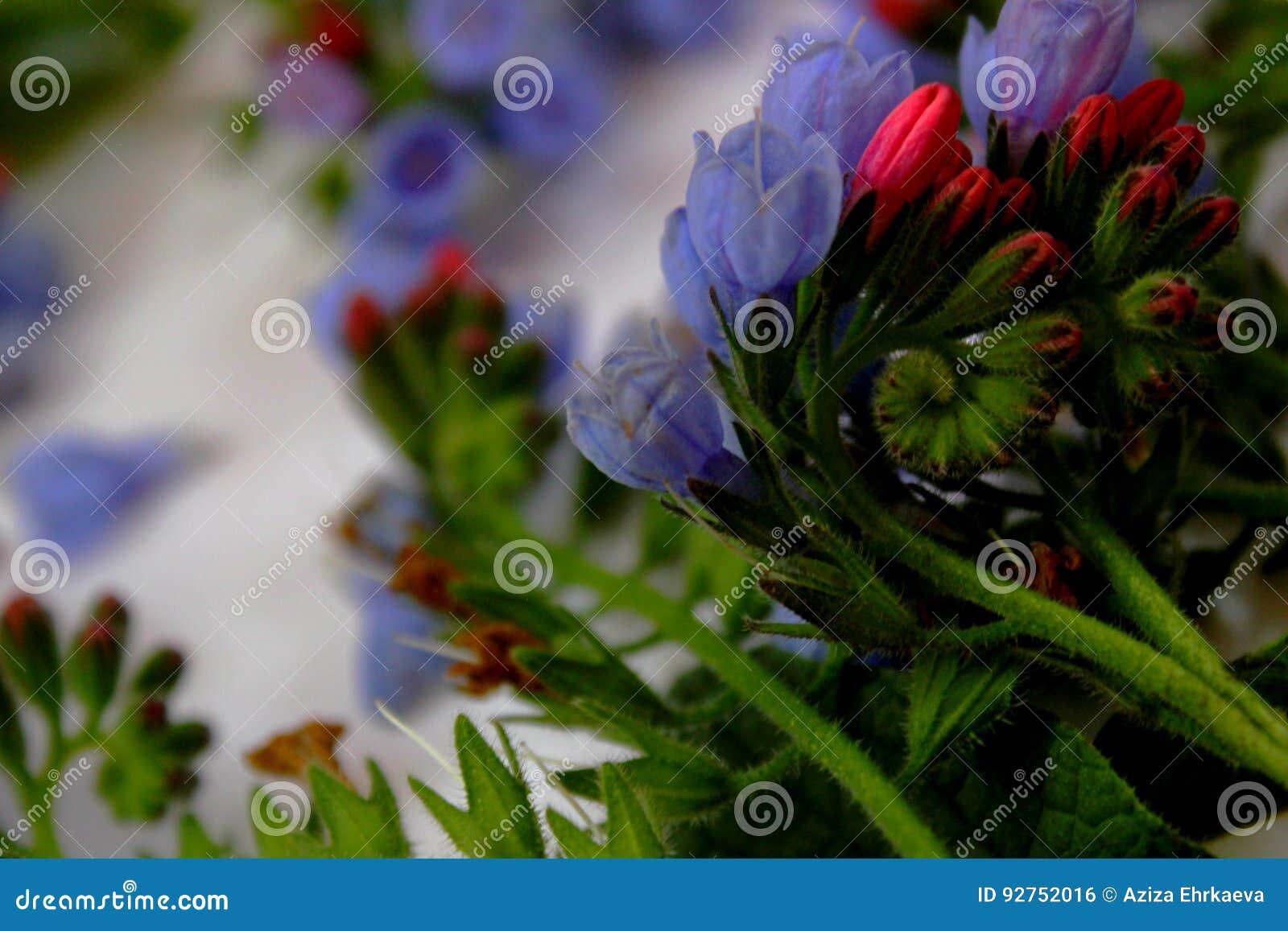 Garten blumen blau  Fotos Von Gartenblumen, Blaue Glocken Stockfoto - Bild von abbildung ...