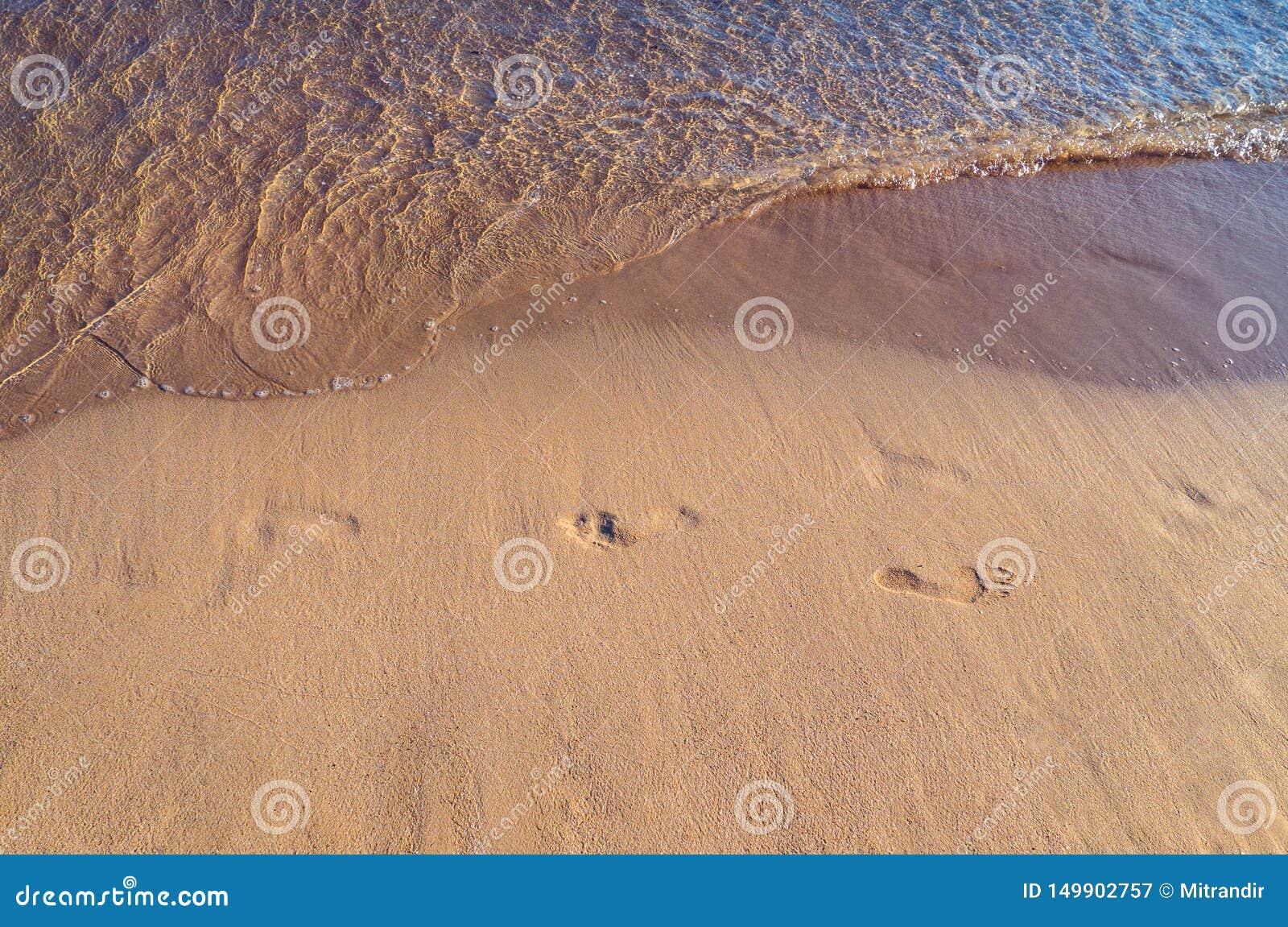 Fotspår på en tom tropisk sandig strand