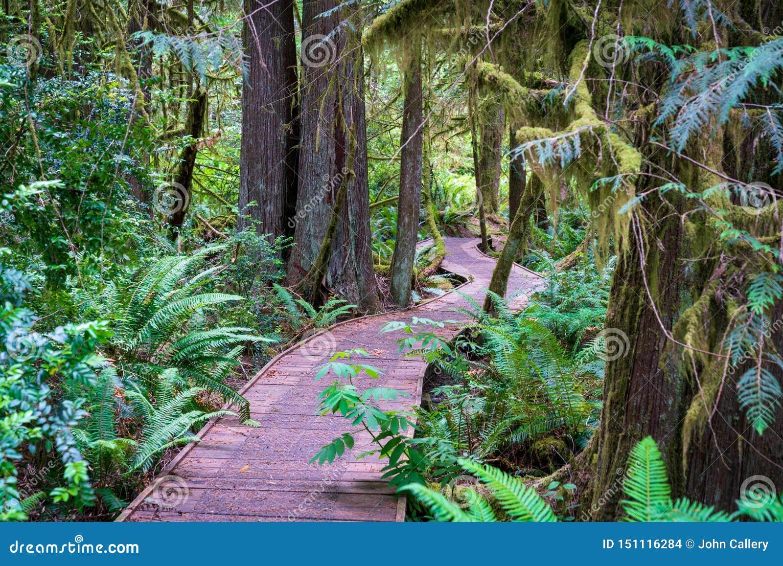 Fotvandra slinga för trästrandpromenad som är djup i skog